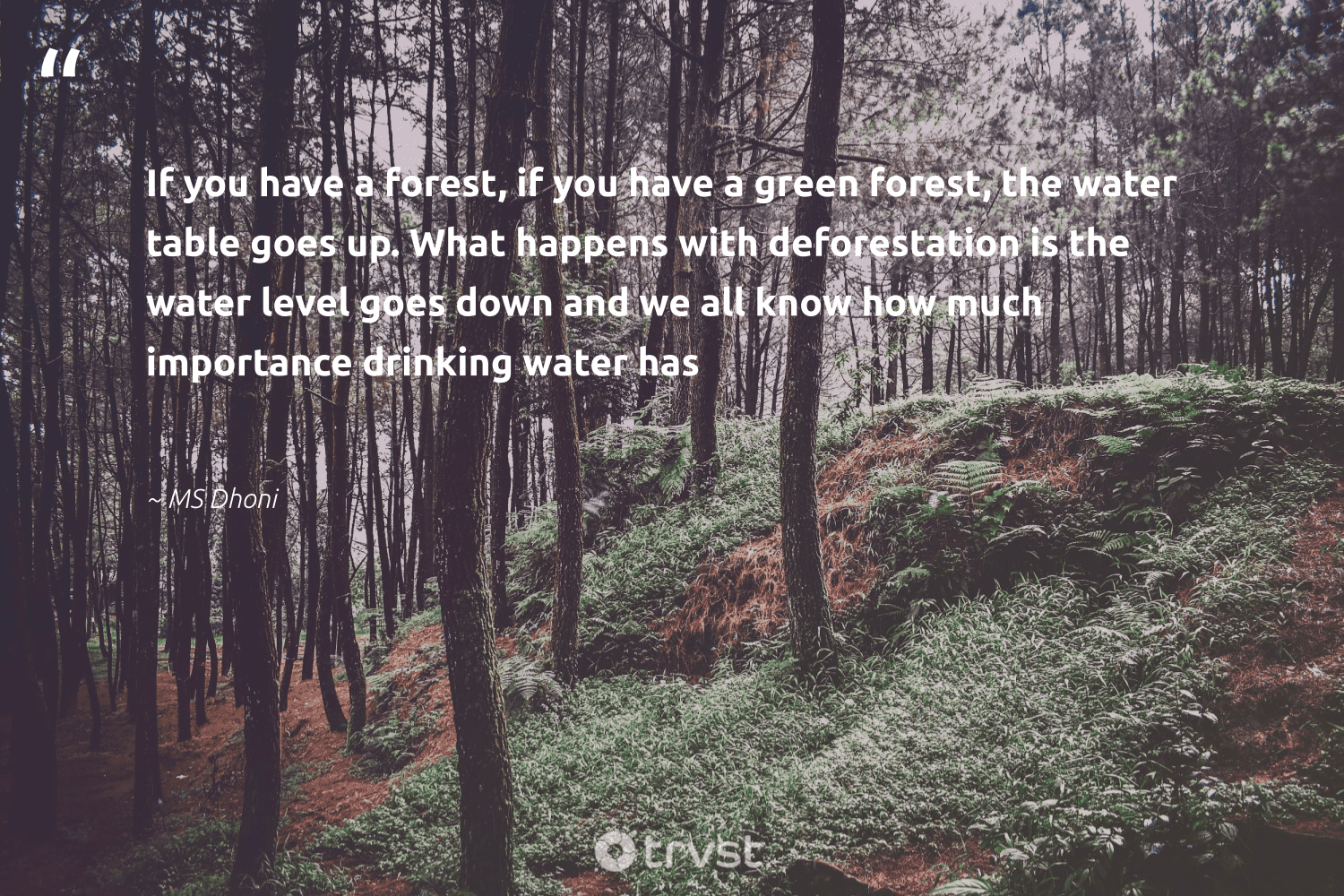 """If you have a forest, if you have a green forest, the water table goes up. What happens with deforestation is the water level goes down and we all know how much importance drinking water has""  - MS Dhoni #trvst #quotes"