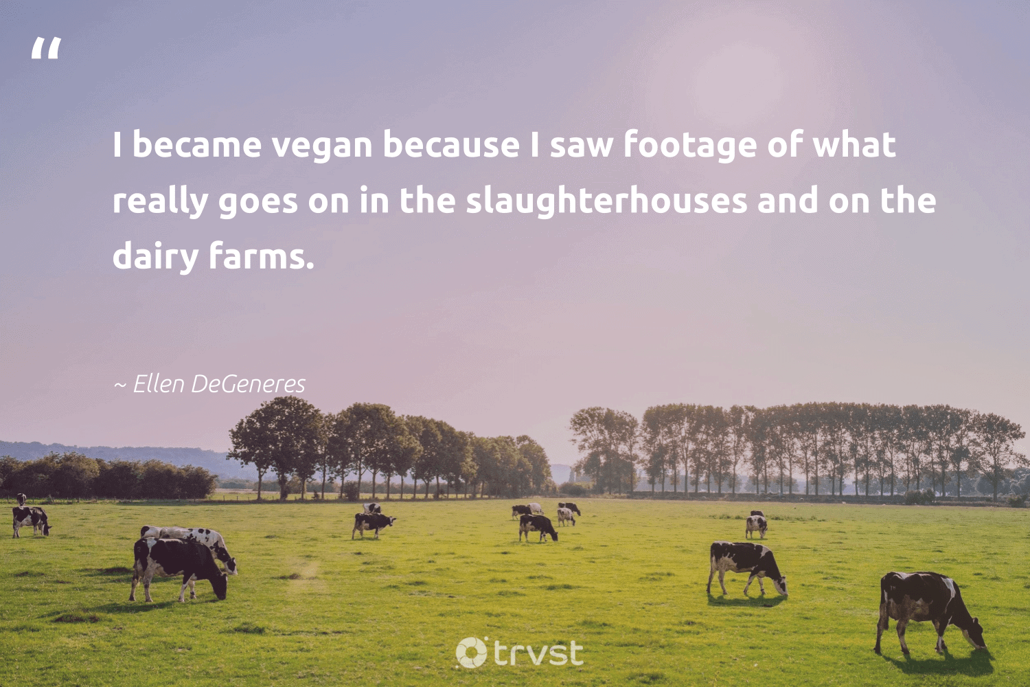 """I became vegan because I saw footage of what really goes on in the slaughterhouses and on the dairy farms.""  - Ellen DeGeneres #trvst #quotes #vegan #govegan #gogreen #sustainable #dogood #plantbased #greenliving #green #changetheworld #veggie"