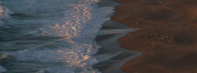 History Tidal Energy