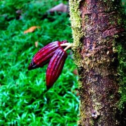 Costa Rica Rainforest and Chocolate Adventure