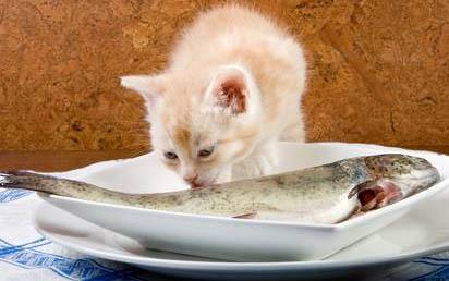 Повышенный аппетит у кошки