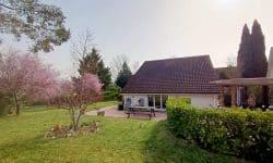 Villa 50 - Tuin - Bloesem