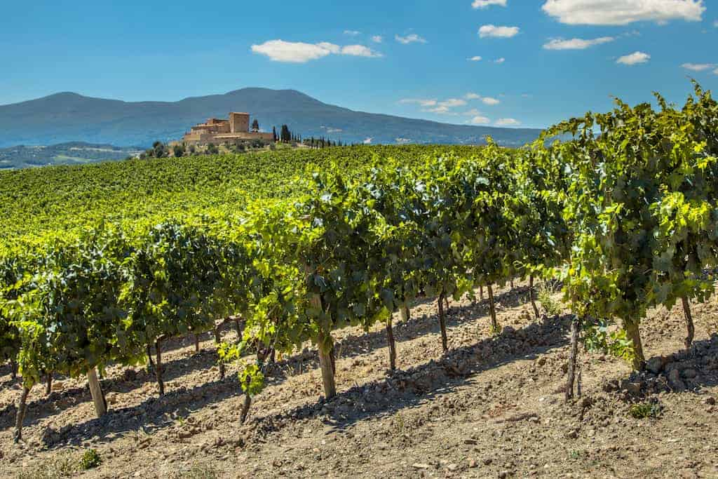 Cabernet Sauvignon Taste Profile & Characteristics • Winetraveler