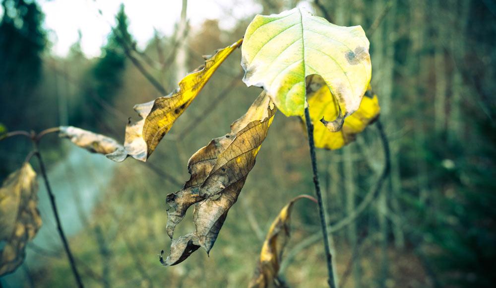 Herbst Blätter Nahaufnahme