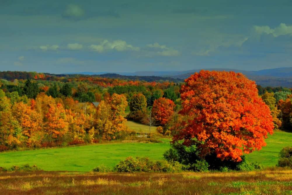 Mile around Woods in North Bennington, Vermont