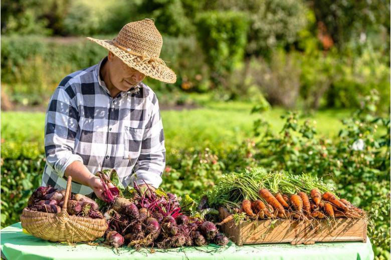 фермер продает овощи фото