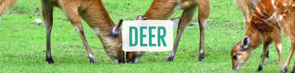 deer-header