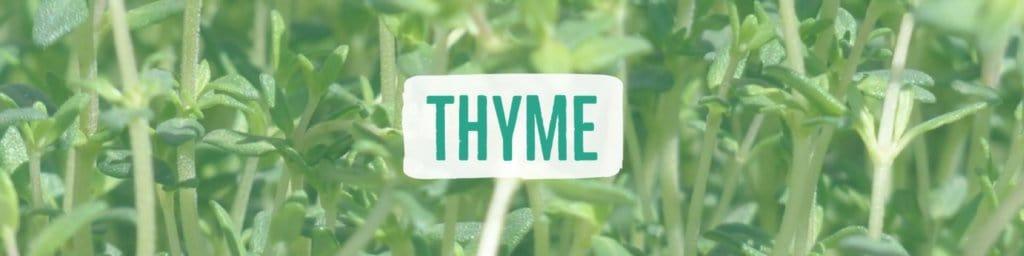 thyme-header