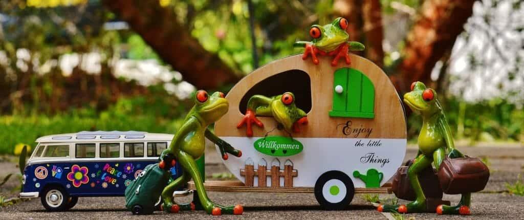 Frogs living in a caravan