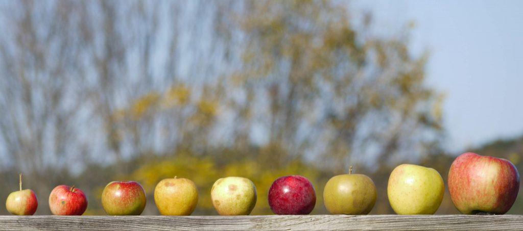 classificazione-mele-sidro