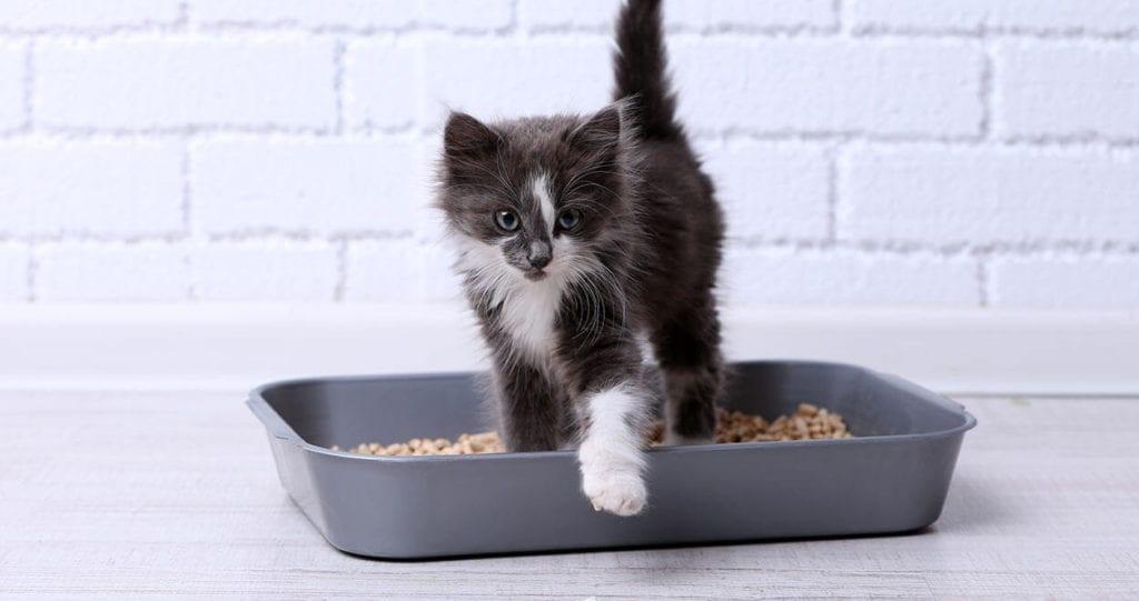 Cat Litter and kitten