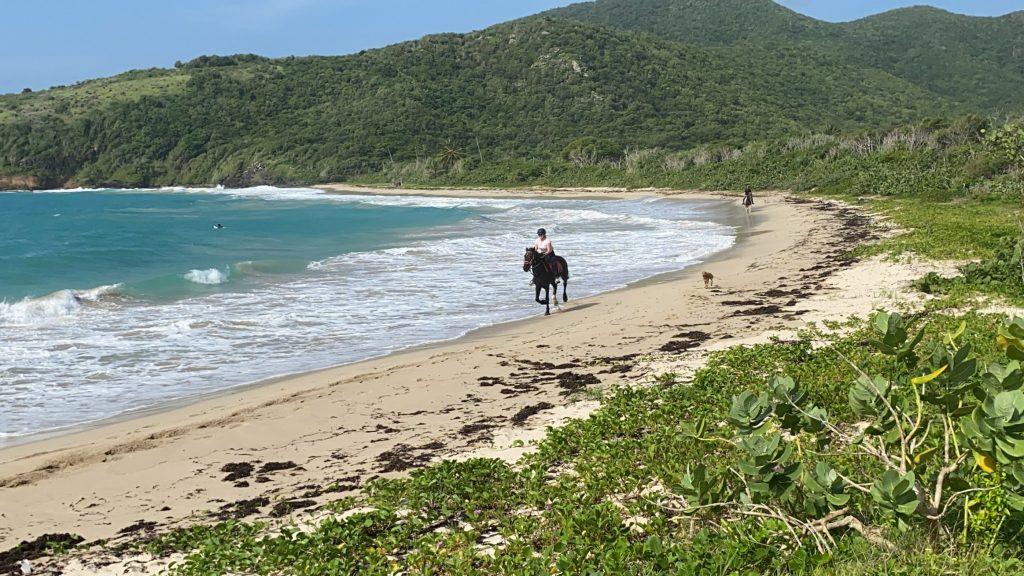 horse gallop beach