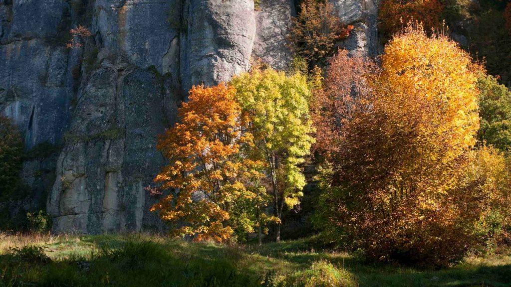 la verna fall foliage