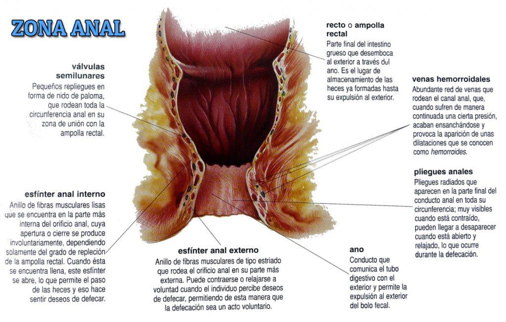 Descripción gráfica de la zona anal