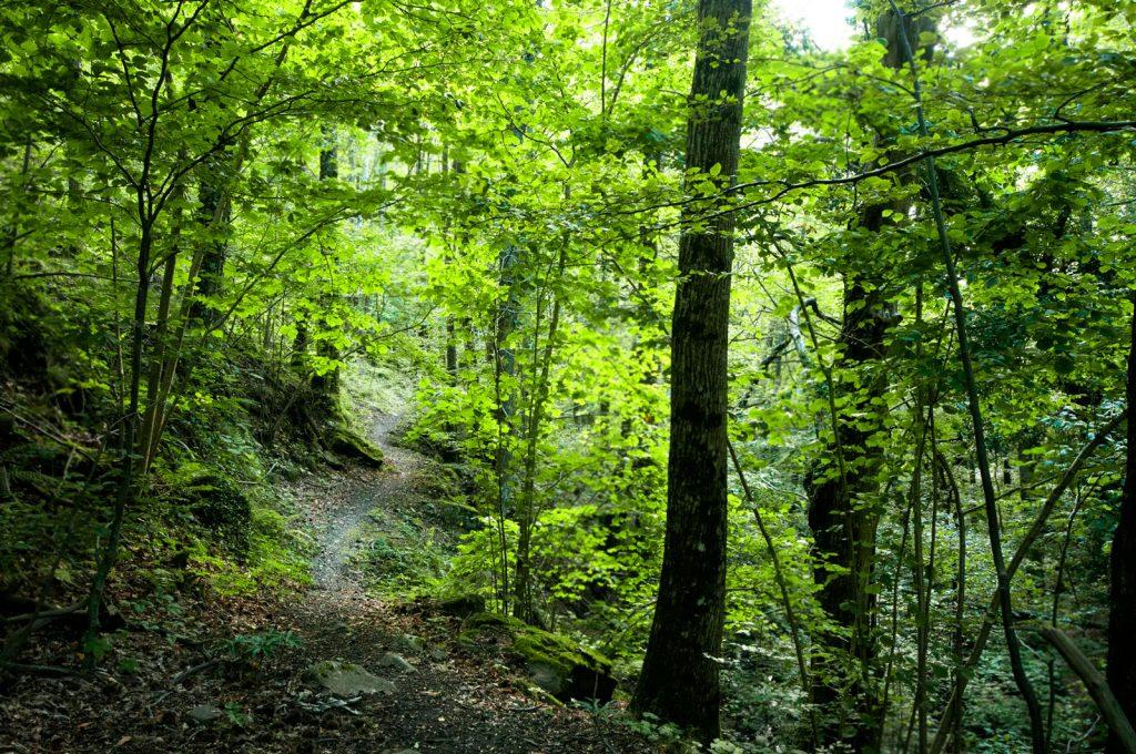 forest bathingen Italie et in toscane