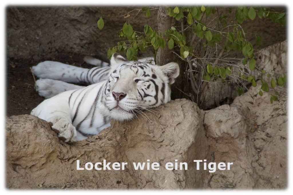 relaxen wie ein Tiger