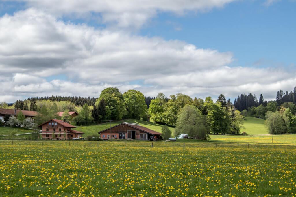 Farm umzingelt von einer Blumenwiese
