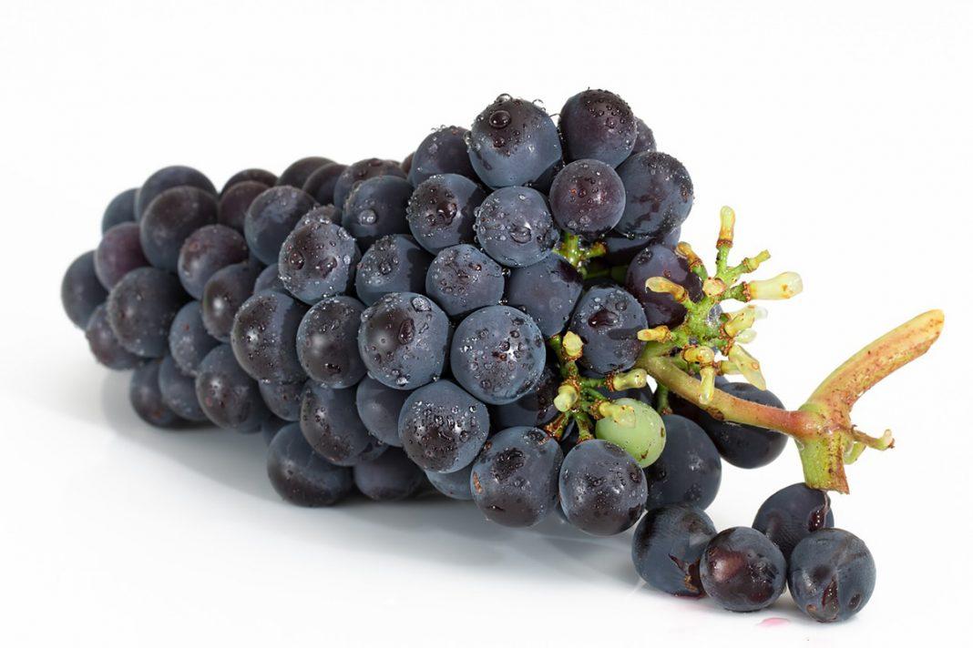 Le raisin pour les maladies rénales, la prévention du cancer et d'autres problèmes de santé…