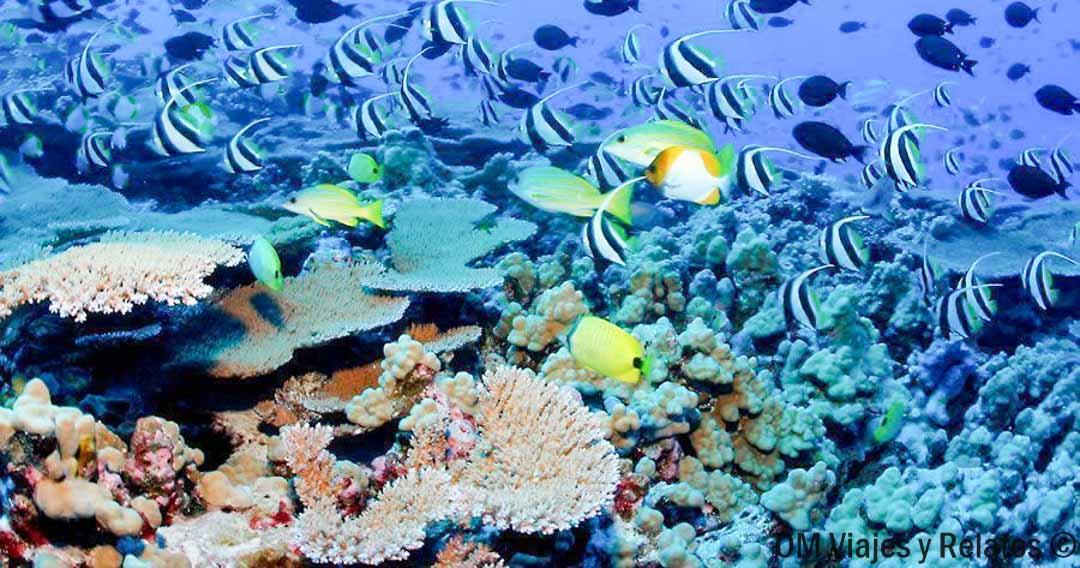 buceo-Maldivas