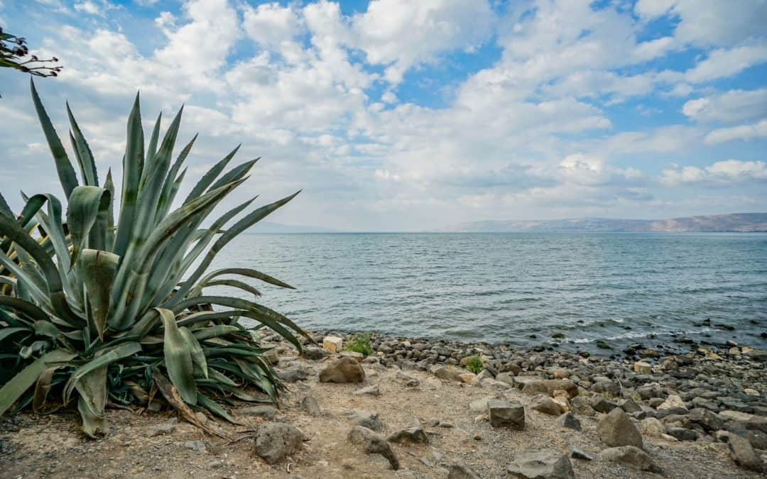 Day Trip to the Lake of Gennesaret and the Golan Heights