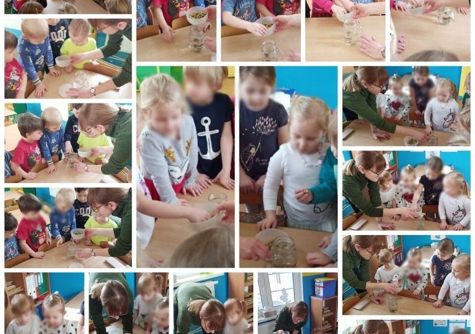 Dzieci z przedszkola na ul. Kochanowskiego w Pruszczu Gdańskim podczas wykonywania doświadczenia zanurzania kamieni w szklance wody..