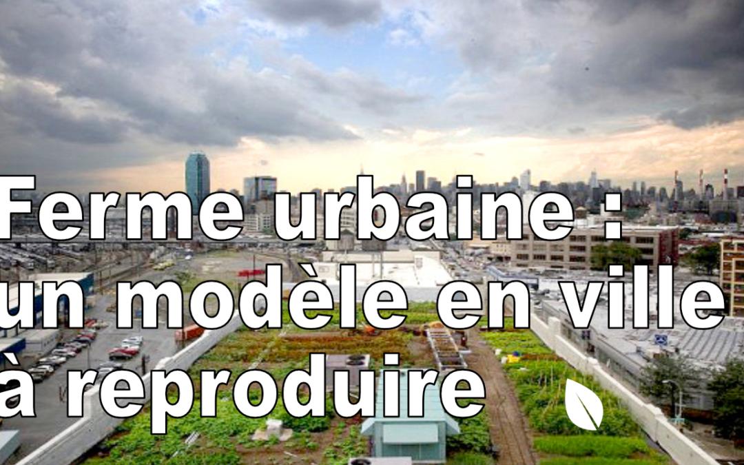 Ferme urbaine : Un modèle en ville à reproduire