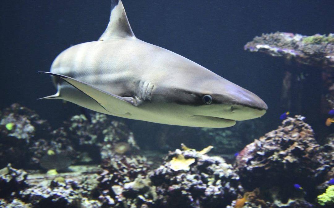Bereit für das Haifischbecken Top-Management?