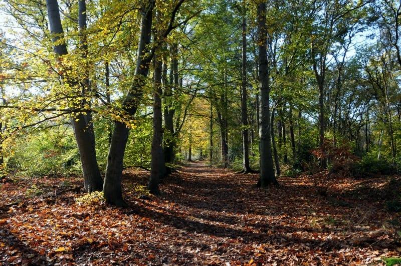 Wandelen op de Woldberg.