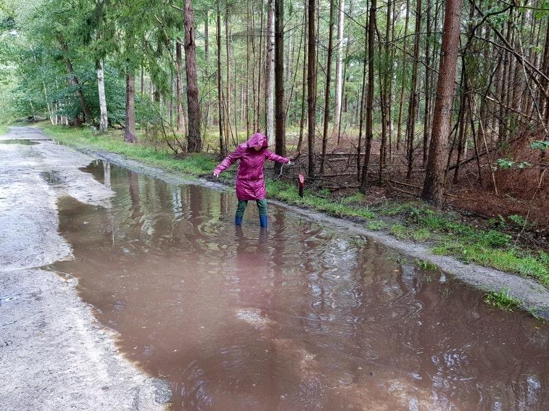 Regen in het bos.