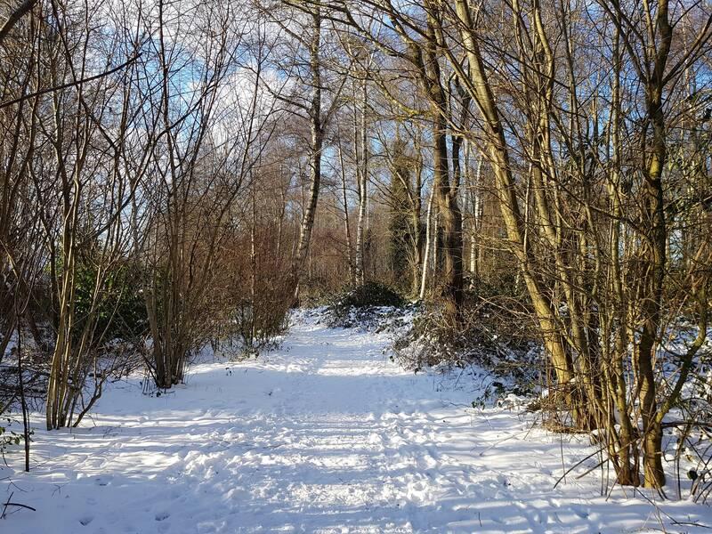 Over sneeuw in februari en zo.