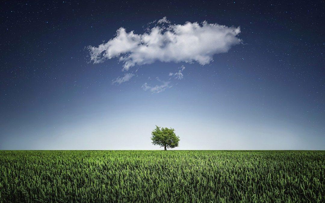 arbre au milieu d'une prairie avec le ciel en fond