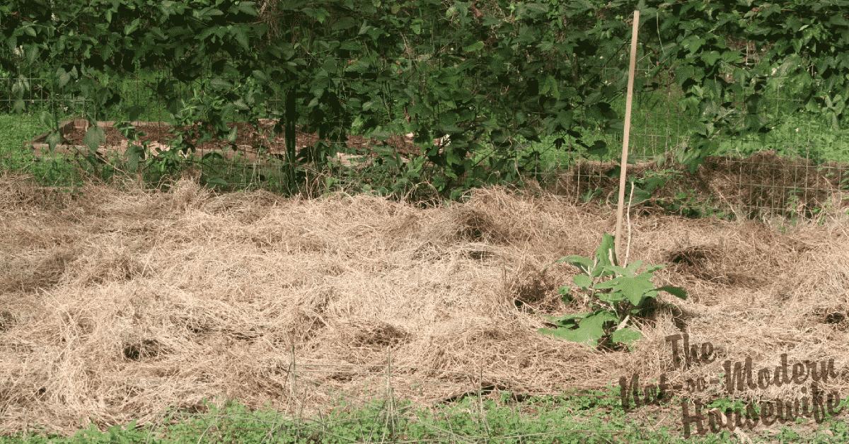 Low-Maintenance No-Till Lasagna Gardening