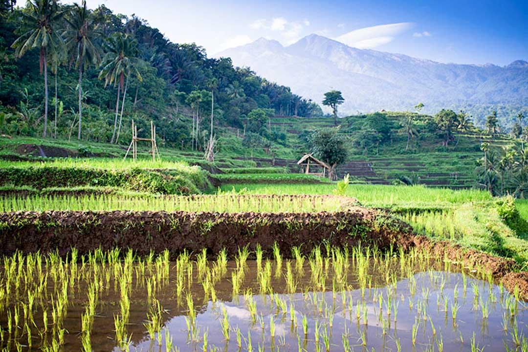 Lombok-Rinjani