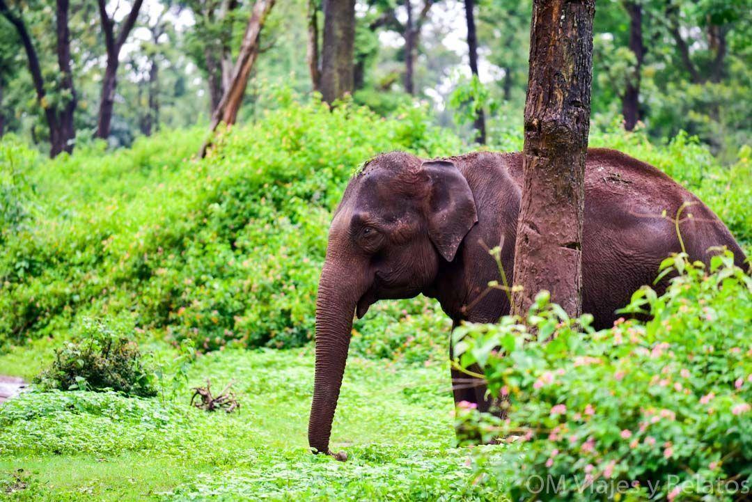 naturaleza-sur-de-la-india-selvas