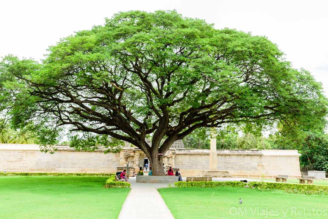 Templo-de-Keshava-Somanthapur-árbol-sagrado