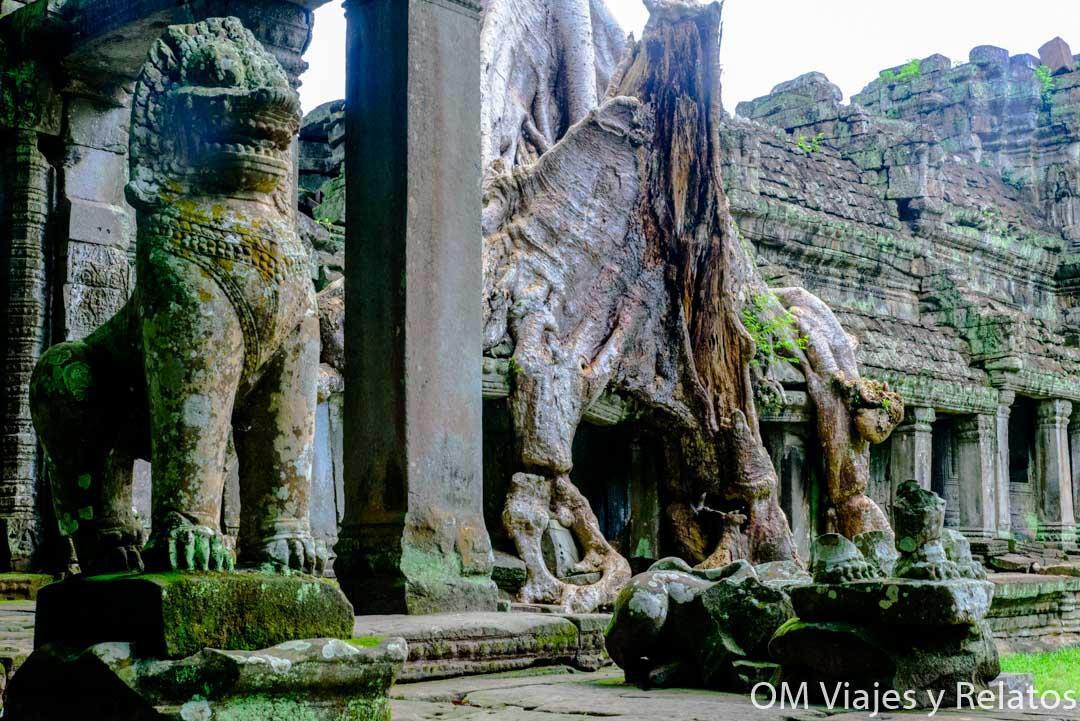 los árboles en Angkor
