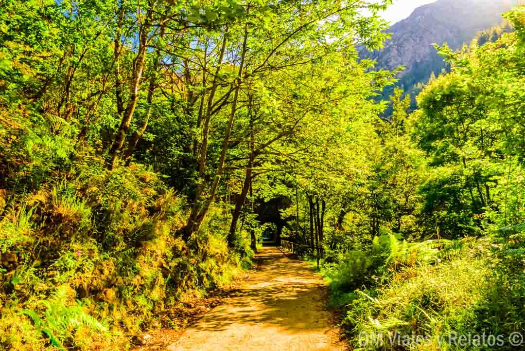 sitios que ver en Asturias: Senda del Oso
