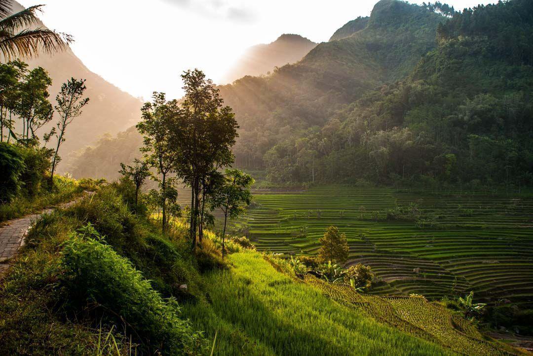que-ver-enYogyakarta-arrozales