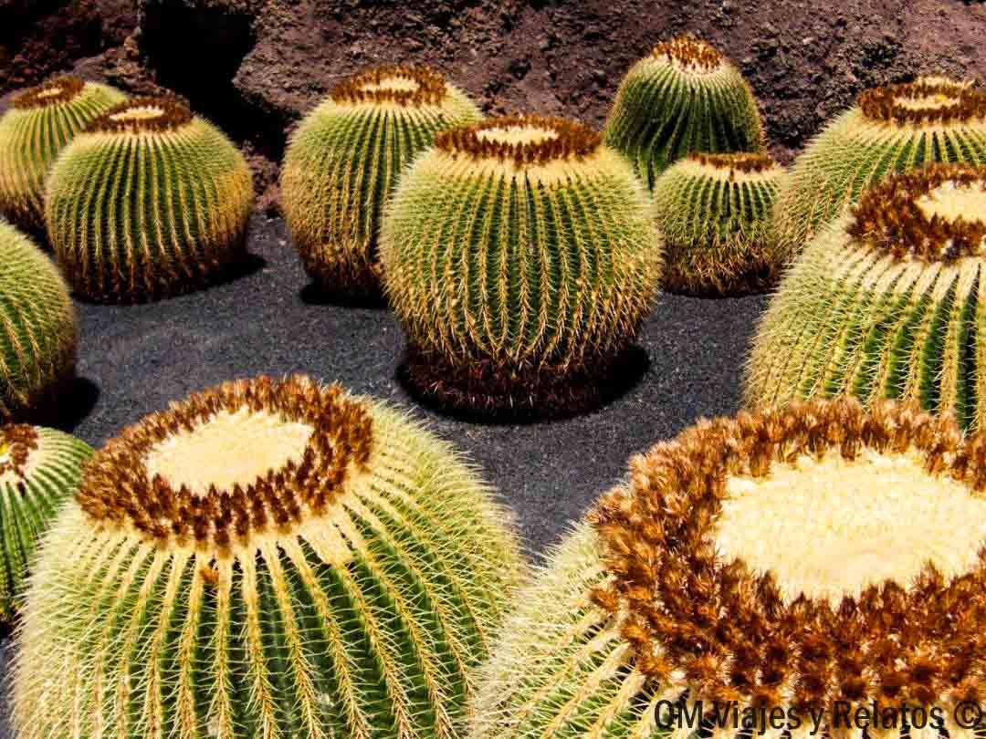 jardín-cactus-Lanzarote