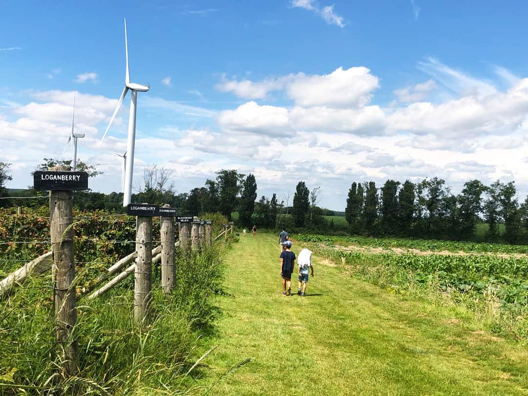 Wandering around the Sharnfold Farm