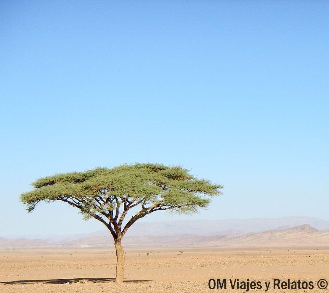 Alquilar-coche-en-Marruecos-roadtrip