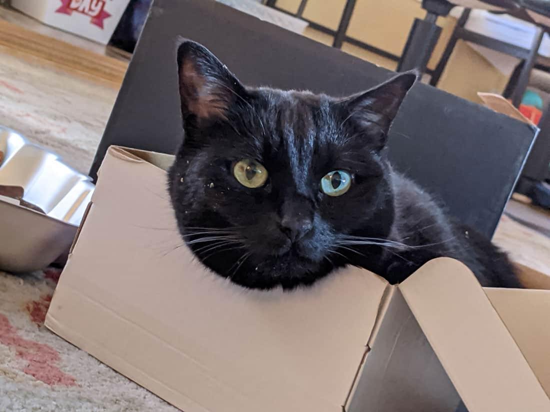 Black cat sitting in a box.  Photo: Sophia Morais.