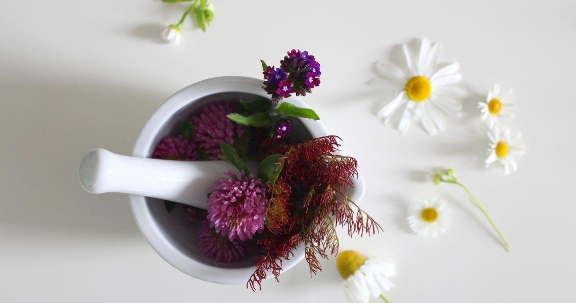 medicinal-flower-4246073_1920