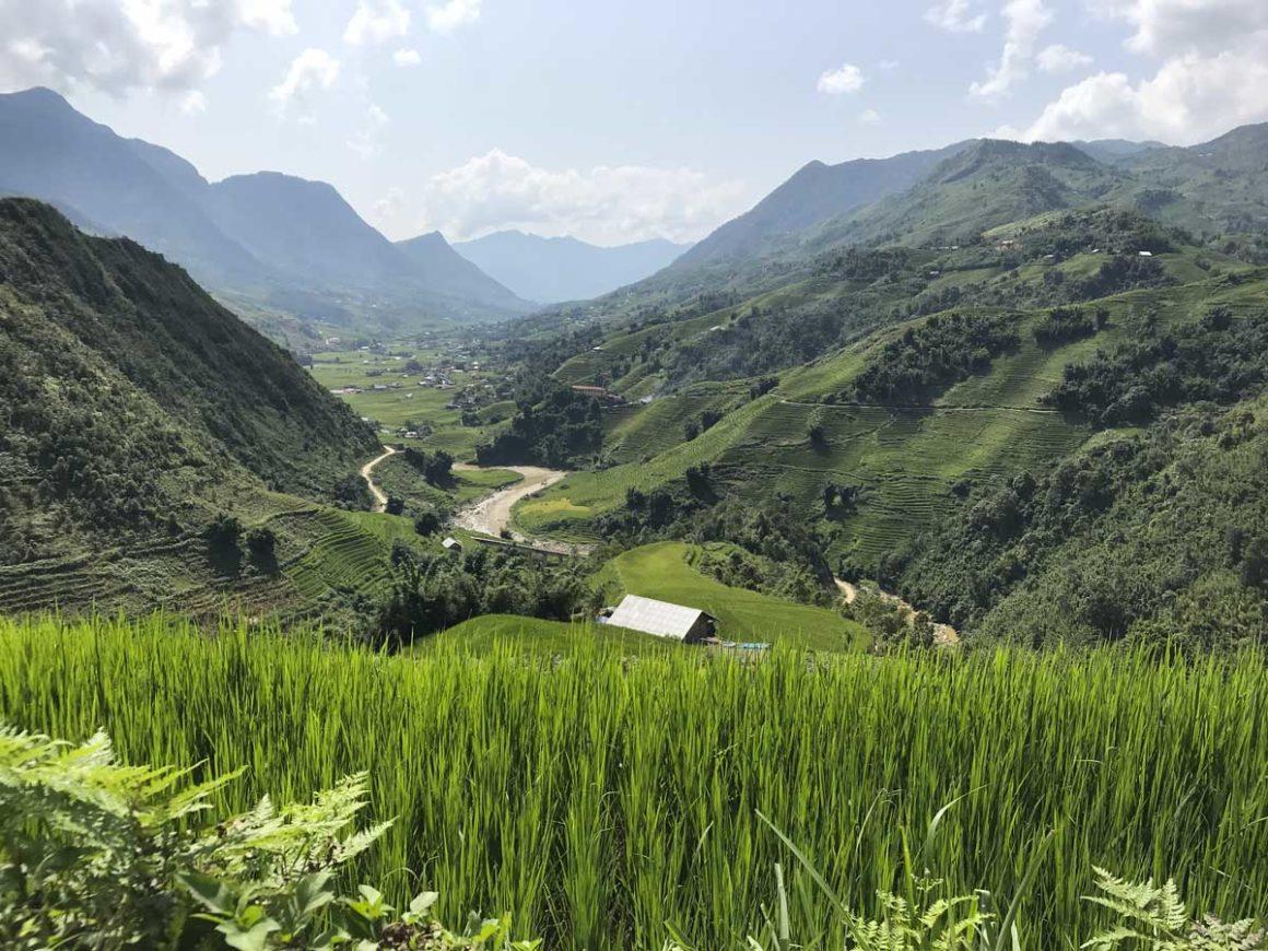 Viaggio in Vietnam in agosto - Risaie a terrazza a Sa Pa