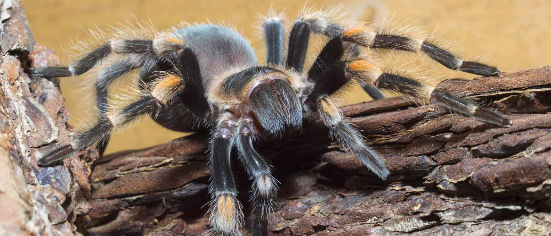 Почему пауки не насекомые