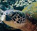 Marine Species (Steven W Smeltzer)