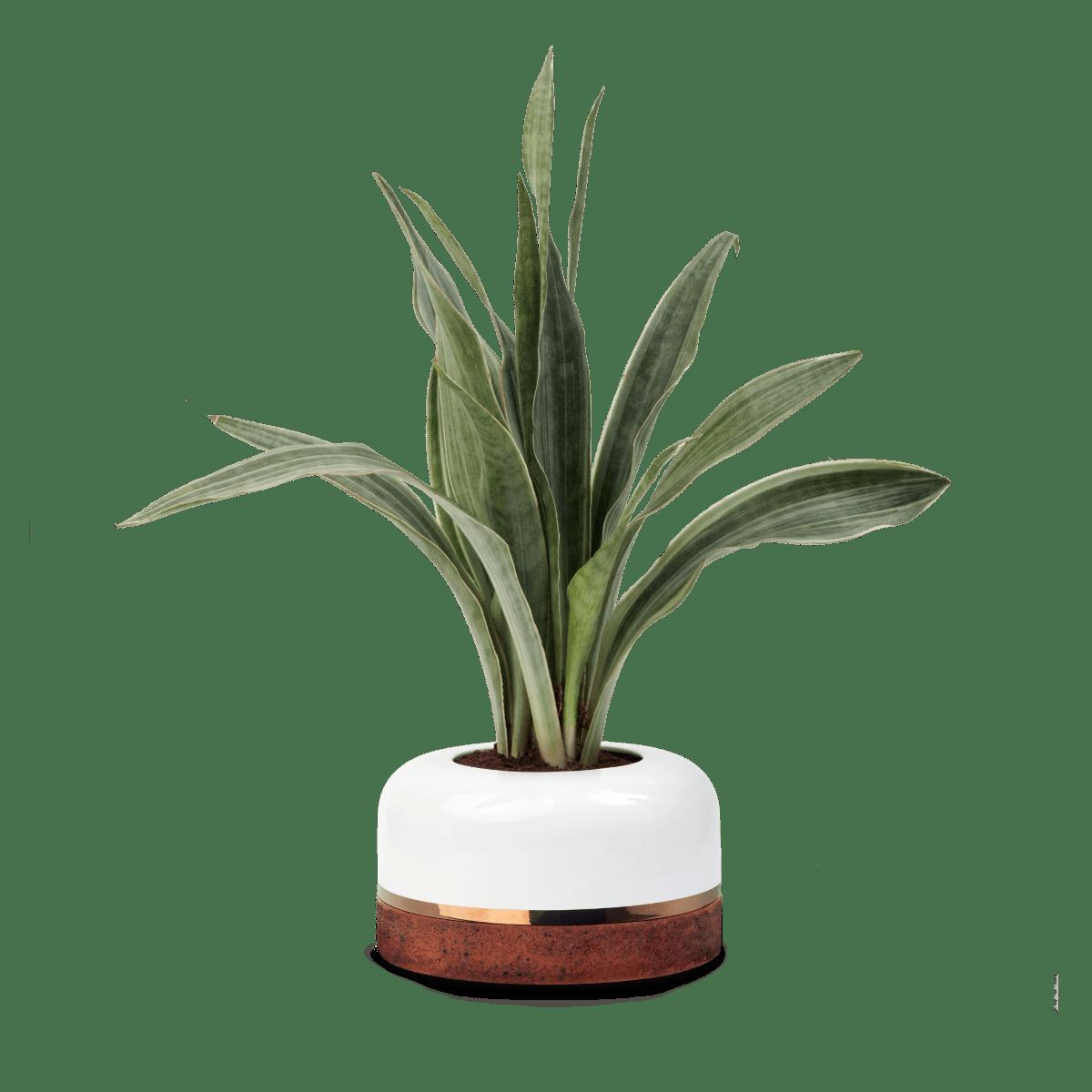 maceta de cerámica elegante