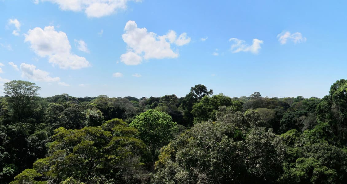A view of the tropical forest from a USGS Amazon forest study site near Santarém, Brazil.