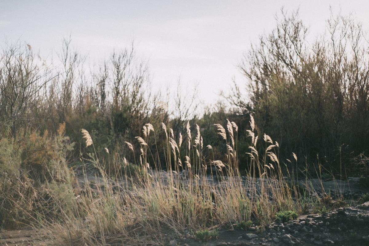 fotografia pareja almeria tabernas