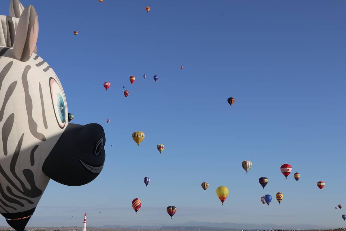 festival de globos aerostaticos albuquerque zebra